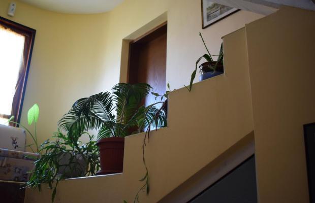 фотографии Sunny - Viki изображение №16