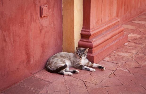 фото Monasterio de San Francisco изображение №46
