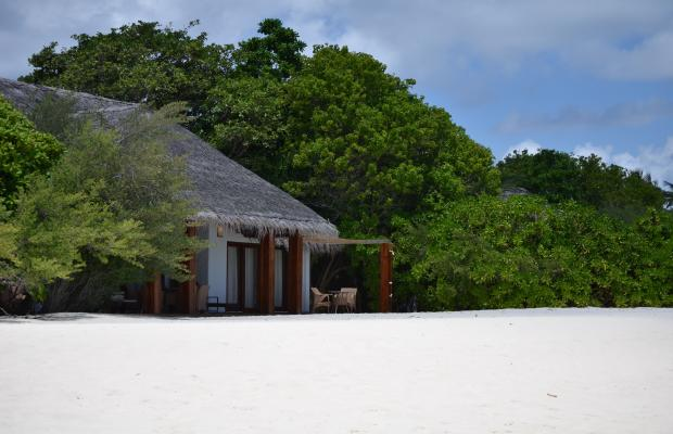 фотографии отеля Palm Beach Resort and Spa Maldives изображение №15