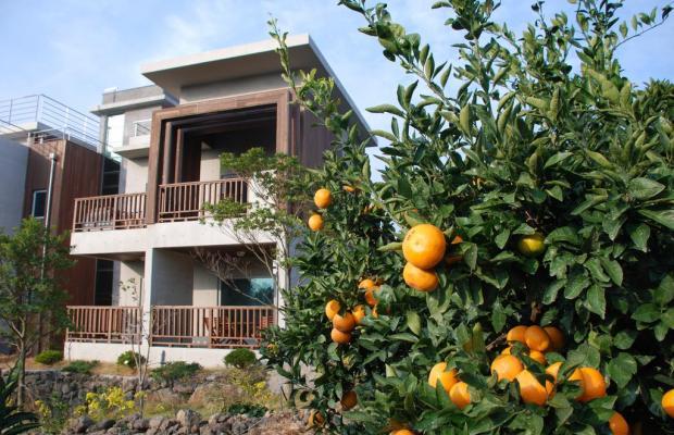 фотографии Jejueco Suites изображение №28