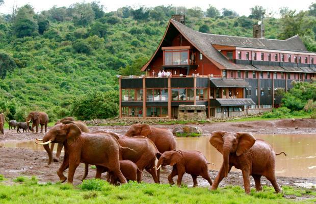 фотографии отеля The Ark изображение №11