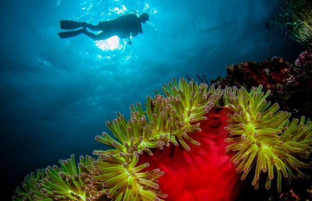 фотографии Wakatobi Dive Resort изображение №24
