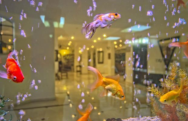 фото отеля Sinatra изображение №9