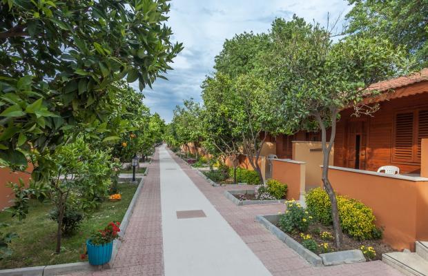 фотографии Ozlem Garden Hotel изображение №20
