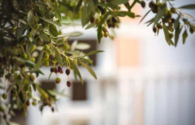 фотографии отеля Paradise Primavera Apartments изображение №3