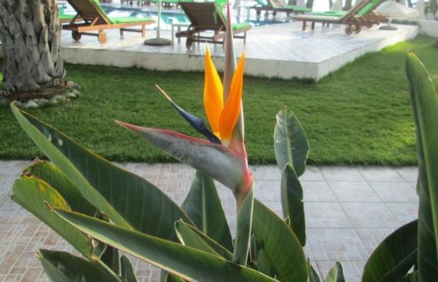 фотографии отеля Zervas Beach изображение №3