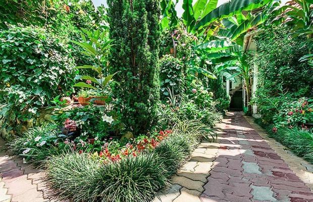 фотографии Банановый рай (Bananovyj raj) изображение №24