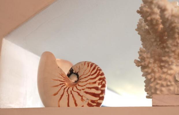 фотографии Nautilus изображение №8