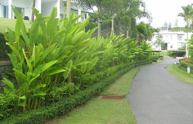 фото отеля Grove Gardens Phuket изображение №57
