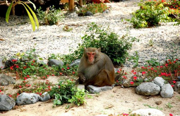фотографии Monkey Island Resort изображение №20