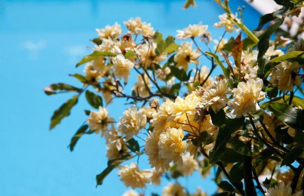фото Albergo Villa Rosa изображение №6